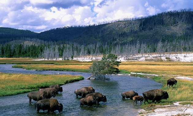 1358708931_bisonu_na_reke_firehole_v_yellowstone_national_park
